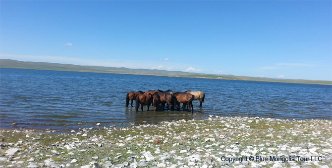 Active Adventure Safari Tour Highlights Mongolia Jeep Travel Image 01