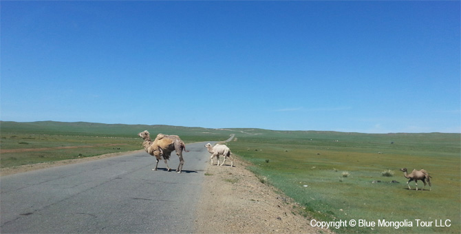 Active Adventure Safari Tour Highlights Mongolia Jeep Travel Image 5