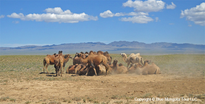 Active Adventure Safari Tour Highlights Mongolia Jeep Travel Image 8